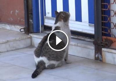 Doğum Sancısıyla Doktorun Kapısına Dayanan Kedi
